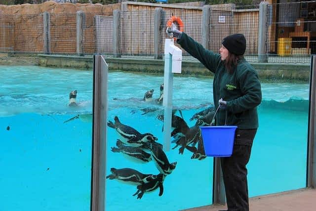 London Zoo Penguin Feeding
