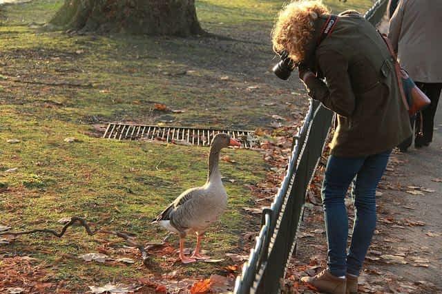 St james Park Bird